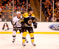 Zack Hamill Boston Bruins Royalty Free Stock Images