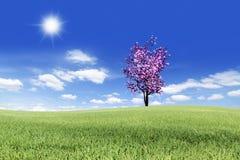 Zacken Sie Baum in der Wiese aus Stockfotografie