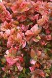 Zacken Sie Blätter aus Lizenzfreie Stockfotografie