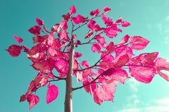 Zacken Sie Blätter aus Stockfoto