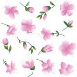 Zacken Sie Blumen auf Weiß aus. Lizenzfreie Stockfotos