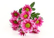 Zacken Sie Blumen aus Stockfoto