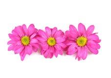 Zacken Sie Blumen aus. lizenzfreie stockbilder