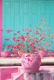 Zacken Sie gekochten Terra cota Topf mit den roten und rosa Blumen, Hausfassade mit rosa und grüner Farbe aus Lizenzfreies Stockbild