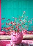 Zacken Sie gekochten Terra cota Topf mit den roten und rosa Blumen, Hausfassade mit rosa und grüner Farbe aus Stockfotos