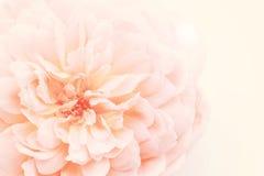 Zacken Sie rosafarbenes Makro aus Stockbilder