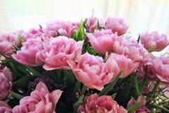 Zacken Sie Tulpen aus Lizenzfreies Stockfoto