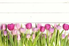 Zacken Sie Tulpen aus Lizenzfreie Stockfotografie