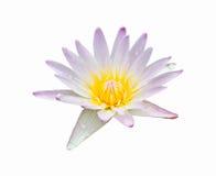 Zacken Sie Waterlily aus Lizenzfreie Stockbilder