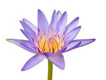 Zacken Sie Waterlily aus Lizenzfreie Stockfotografie