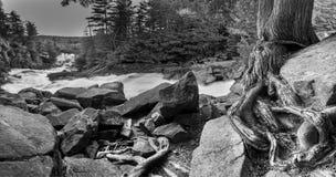 Zackige Fälle, Algonquin-Park, Ontario, Kanada stockfotografie