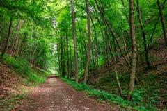 Zaczarowana Lasowa ścieżka Obrazy Royalty Free