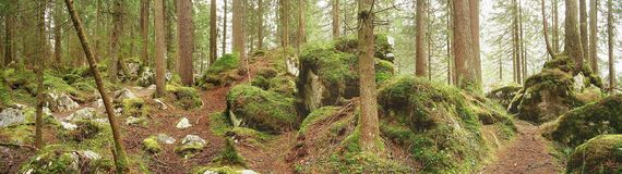 zaczarowanego lasu Obraz Royalty Free