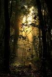zaczarowanego lasu zdjęcie royalty free