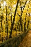 zaczarowanego lasu zdjęcie stock