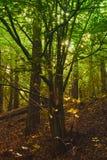 zaczarowanego lasu Fotografia Stock