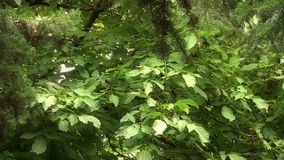 Zaczarowany bajka las zdjęcie wideo