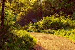 Zaczarowany czarodziejski las Zdjęcie Royalty Free