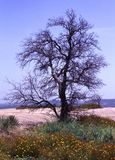 Zaczarowany drzewo Obraz Royalty Free
