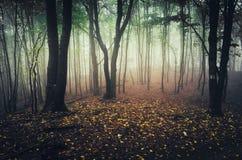 Zaczarowany jesień las z spadać liśćmi zdjęcie stock