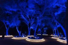 Zaczarowany: Las światło - pięknie iluminujący drzewa w zmroku obraz stock