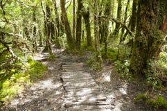 Zaczarowany las Chile - Queulat park narodowy - obraz stock