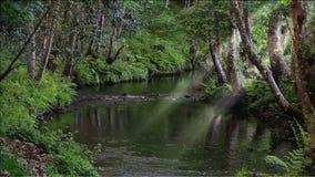 Zaczarowany las i rill zbiory wideo