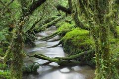 Zaczarowany las, Queulat park narodowy, Chile zdjęcie royalty free