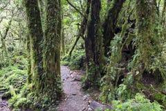 Zaczarowany las, Queulat park narodowy (Chile) zdjęcie royalty free