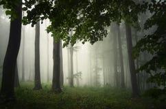 Zaczarowany las z mgłą obraz royalty free