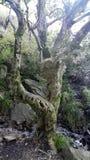 Zaczarowany lasowy drzewo zdjęcia stock