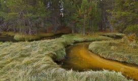 zaczarowany lasowy strumień zdjęcia royalty free