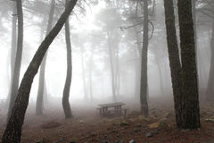 Zaczarowany mgłowy popielaty las Obrazy Royalty Free