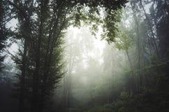 Zaczarowany mistyczny las z mgłą zdjęcie royalty free