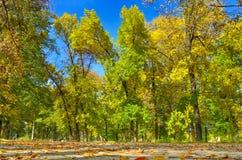 Zaczynać jesień w miasto parku Obrazy Stock