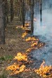 Zaczynać pożar lasu Fotografia Stock