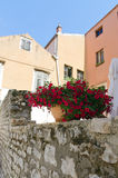 Zadar. Flores rojas Fotografía de archivo