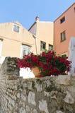 Zadar. Red Flowers. Flowerpot with red flowers on a stone wall, Zadar, Croatia Stock Photography