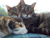 Zadawalający koty na Pogodnym okno obraz stock