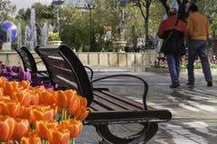 Zadek dwa mężczyzna chodzi przy plenerowym parkiem Fotografia Royalty Free