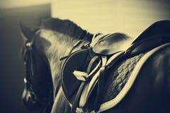Zadel met stijgbeugels op een rug van een paard Stock Foto