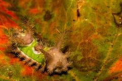 Zadeldak Caterpillar stock foto's