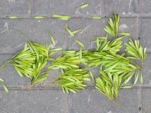 Zaden in de vorm van de bladeren Stock Fotografie