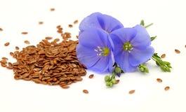 Zaden en bloemen van vlas royalty-vrije stock afbeelding