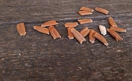 Zaden op houten macro dichte omhooggaand als achtergrond royalty-vrije stock foto