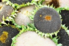 Zaden op zonnebloemen stock foto's