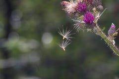 Zaden van bloemenvlieg in de lucht stock foto