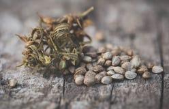 Zaden van Cannabis of hennep stock foto's