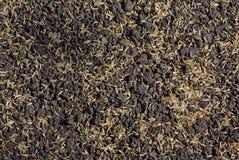 Zaden van gazongras op de grond Stock Afbeelding