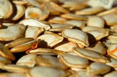 Zaden van verse oogst stock foto's
